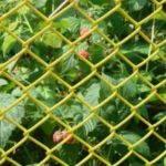 забор из сетки рабица желтая